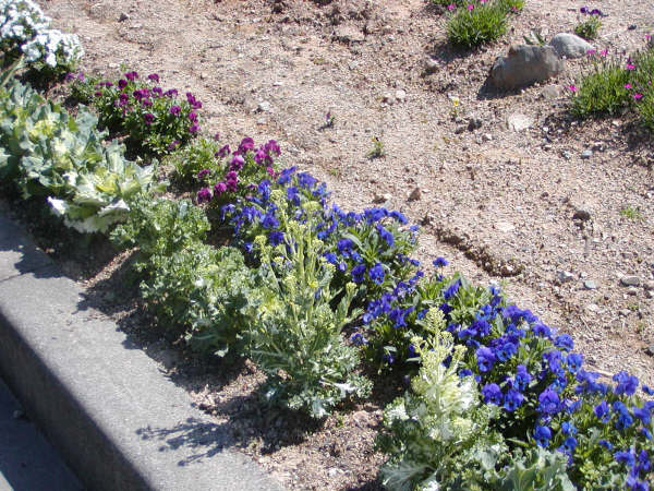 道路のそばの花壇