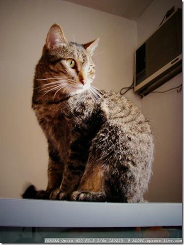 IMGP2707_剛洗好的貓