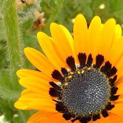 flores%2003